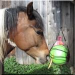 Meine Pferdearbeit